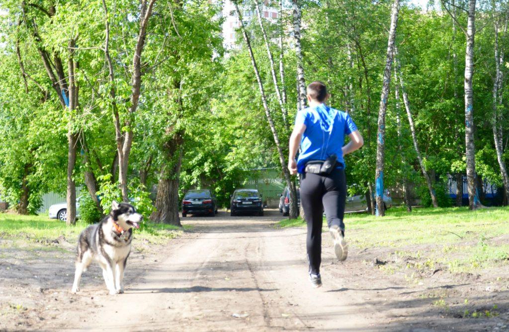 Собака напряжена, бегун в зоне ее видимости