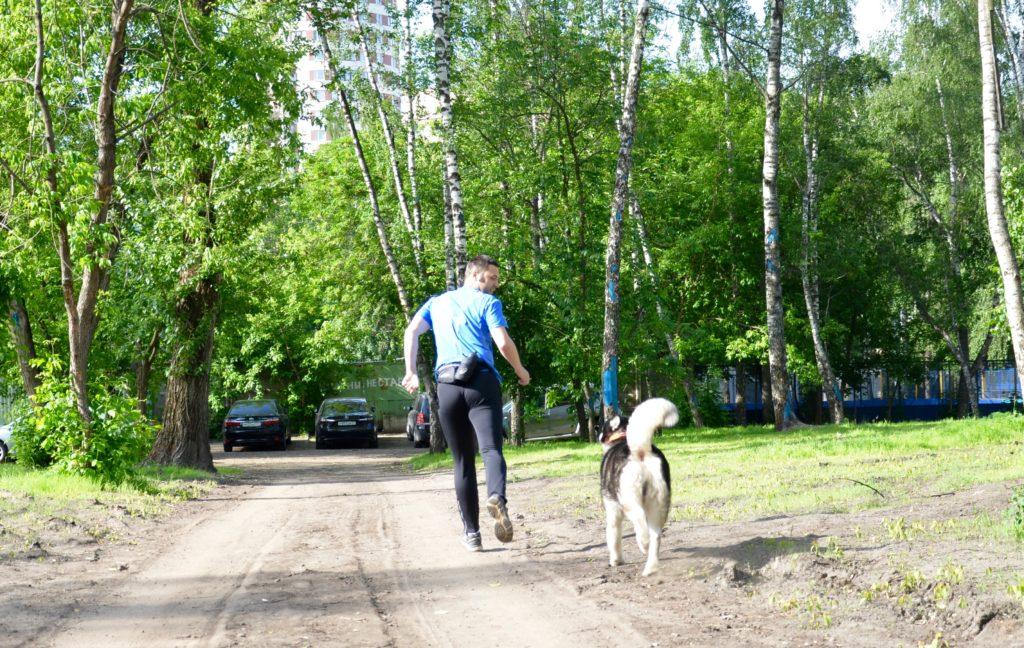 Собака преследует бегуна, следует сбросить темп