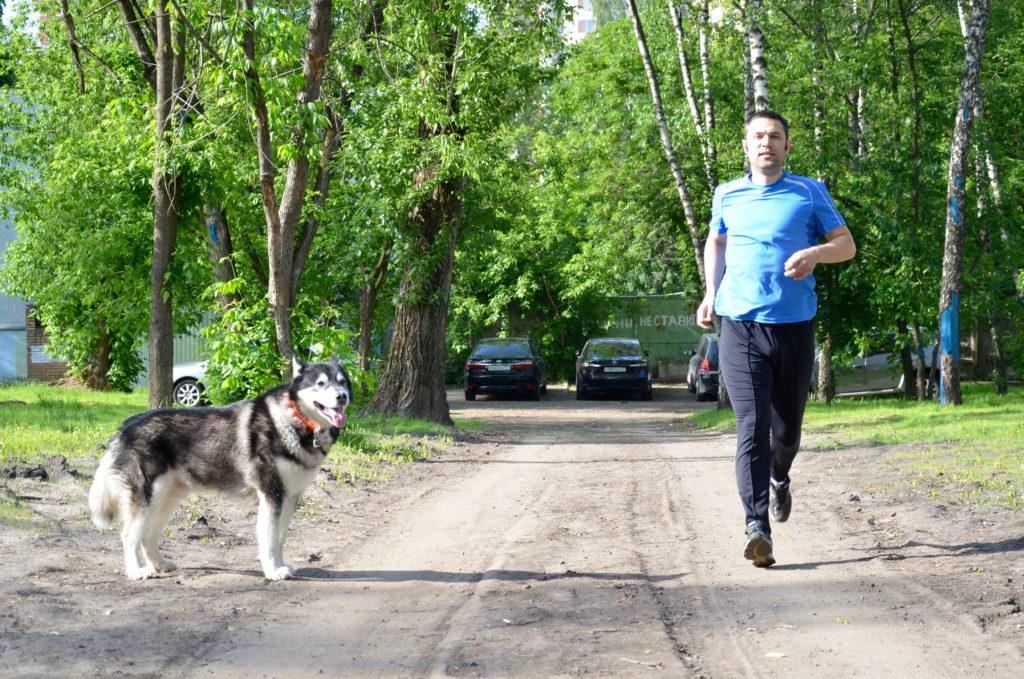 """Собака не смотрит в сторону бегуна, один из """"успокаивающих"""" сигналов"""