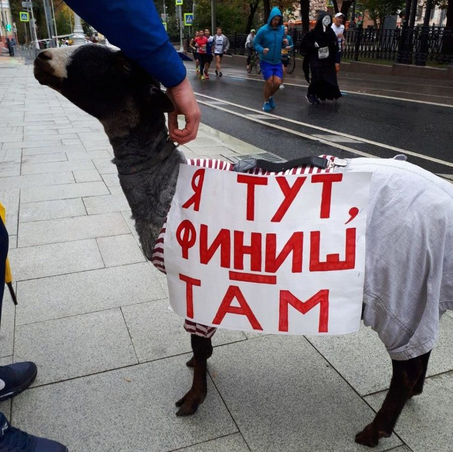 Московский марафон Moscow marathon